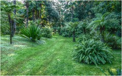 Un week end a ... (Augusta Onida) Tags: italy italia lagomaggiore piemonte parcovillataranto garden grass prato albero tree leicam