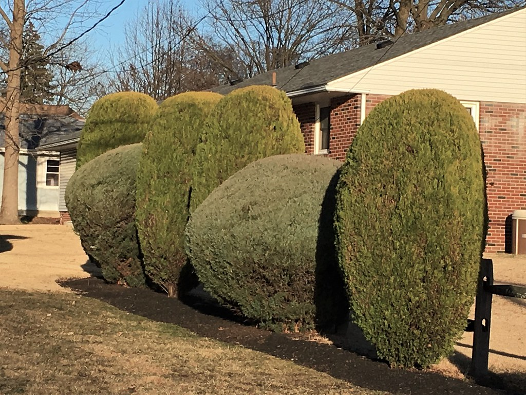 The World\'s Best Photos of suburbia and topiary - Flickr Hive Mind