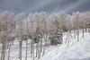 2017-00389 (kjhbirdman) Tags: activities colorado places snowskiing steamboatsprings unitedstates