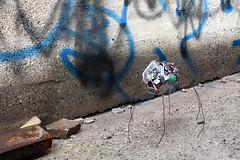 2017.SPG.ARCH 390-790 (Bouchard)_UEA_DW No.01 (Urban Vacancy)_J.Huth, J.Rodriguez & M.Winder_Model_20 (Nikole Bouchard) Tags: milwaukee wisconsin architecture urbandesign uwm universityofwisconsinmilwaukee 30thstreetindustrialcorridor art workshop charrette waste community