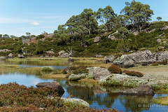 20170301-27-Light alpine scrub (Roger T Wong) Tags: australia greatpinetier np nationalpark sel70300g sony70300 sonya7ii sonyalpha7ii sonyfe70300mmf2556goss sonyilce7m2 tasmania wha wallsofjerusalem worldheritagearea bushwalk camp hike pool reflections tarn trektramp walk water