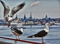 Stockholm (kh goldphoto) Tags: 2014 schweden stockholm immereinehandbreitwasserun kreuzfahrt hdr best panoramio1382370107746138 hafen möwen
