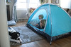 Camping in the living room (grilljam) Tags: seamus 4yrs ewan 7yrs bitzer 1yr puppy bulldoglabmix tent livingroom weekend campplay tvtime winter march2017