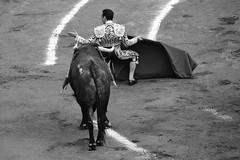 Sin protección (valeriaatorres) Tags: tauromaquia torero toros toreros cdmx plaza méxico bullfighting bullfight monochromatic monocromático outdoors animales arte cultura caballo zotoluco ponce