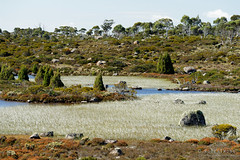 20170302-15-Reeds in lake (Roger T Wong) Tags: australia centralplateauconservationarea greatpinetier sel70300g sony70300 sonya7ii sonyalpha7ii sonyfe70300mmf2556goss sonyilce7m2 tasmania wha worldheritagearea bushwalk camp centralhighlands hike marsh trektramp walk