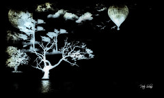 Midnight Balloom Ride (Peter Solano. Pursuing a dream!) Tags: blue trees moon white black reflection water birds ballon