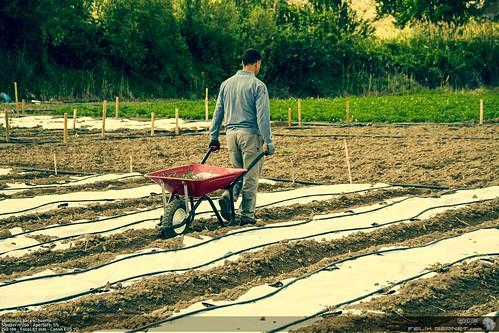 plantones para el huerto