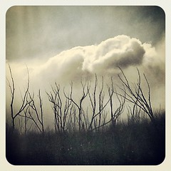Dead Trees #newzealand #canterbury #landscape #dead #tree (geoftheref) Tags: square squareformat earlybird iphoneography instagramapp uploaded:by=instagram foursquare:venue=51a0472b498ef127650f84f7