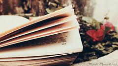 Palavras Plantadas (marceladsm) Tags: beautiful vintage book words wind pages bonito books retro finepix fujifilm livro livros vento palavras planted hs20 paginas exr plantada bookslibroslivros hs20exr