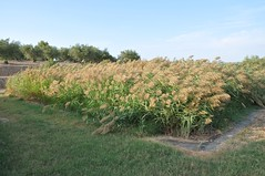 Reed Beds ETAP