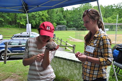 Inspecting a Box Turtle (GSWA Photography) Tags: newjersey education reptile boxturtle morriscounty hardingtownship primrosefarm greatswampwatershedassociation