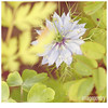 047 (imagepoetry) Tags: blue summer flower green nature yellow garden season leaf blossom bokeh sommer sony natur sigma grün blau blume blätter garten kornblume 70mm imagepoetry sonyalpha