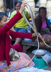 Woman Selling Snakes, Thakhek, Laos (Eric Lafforgue) Tags: people animal vertical asian asia southeastasia day market snake laos foodanddrink developingcountries 3people threepeople traveldestinations colorimage thakhek colourimage frenchindochina frenchprotectorate al9748