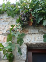 image (Pipika) Tags: greece grapes