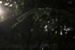 Subtle Charm (applegathc) Tags: trees sun ontario beauty leaves evening charm muskoka