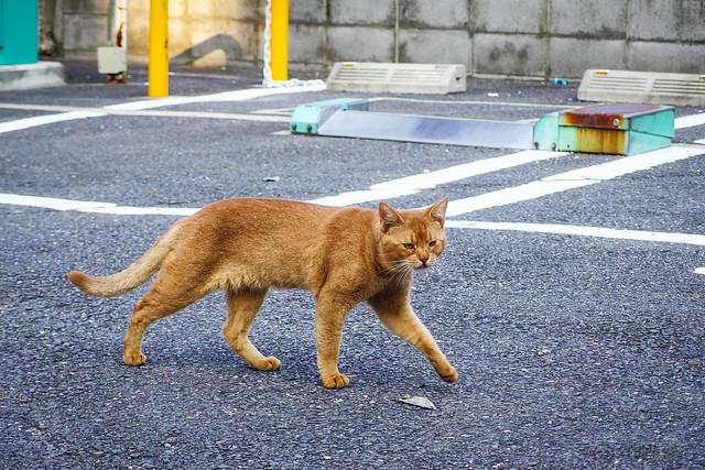 Today's Cat@2013-09-24