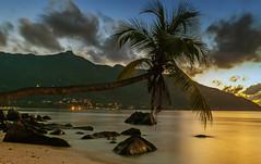 Palm (Liviu Nicolof) Tags: ocean longexposure sunset beach rocks palm seychelles beauvallonbay