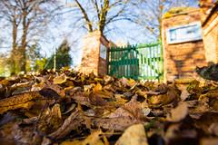 2013-10-31-Herbstfotos-20131031-090144-i083-p0018-SLT-A65V-9_mm-.jpg