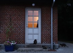 Backdoor light n' life (Jaedde & Sis) Tags: door light cats evening herowinner
