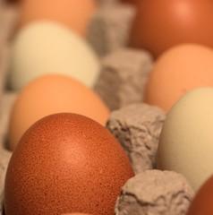 Eggs straight from the chicken (Lauren P. Arfman) Tags: eggs gamewinner