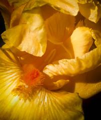 _D7K4144 (5816OL) Tags: flowers iris dad arburetum arboretum2013
