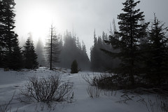 At (my) trail end (apanders) Tags: mountain snow tree silhouette pine oregon forest canon shoe mt unitedstates lookout national hood 6d