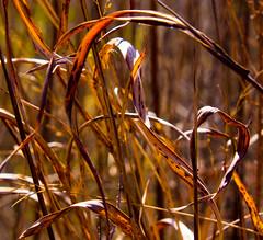 Reedy or Not (TPorter2006) Tags: 2014 february nature oklahoma reserve rural tporter2006 tishomingo wildlife