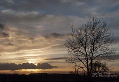 Fading light (Sadloafer) Tags: winter sunset sky cloud nature horizontal outdoors photography day loneliness tranquility nopeople environment baretree colourimage sadloafer hansdavisphotography
