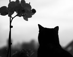 PIxel (nathalie.DEW) Tags: kat chat kitty