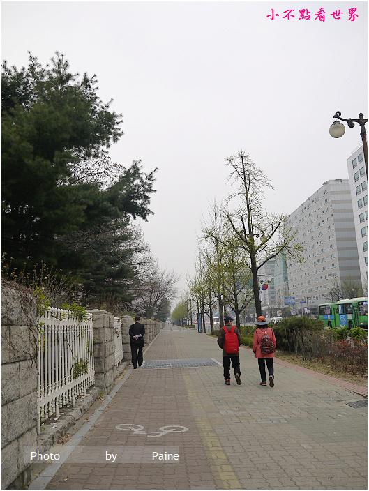 首爾汝矣島輪中路櫻花 (47).JPG