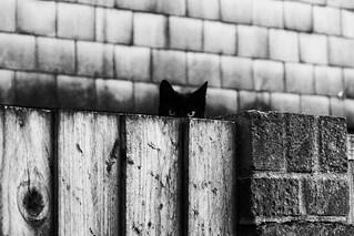 Suspicion.