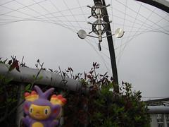 Ambipom in Kasukabe, Saitama 4 (Kasadera) Tags: toys figure pokemon pokmon  kasukabe   pokemonkids  ambipom     ambidiffel capidextre
