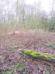 theddingworth - england (Greenes Music) Tags: moss winter deadleaves green leicestershire