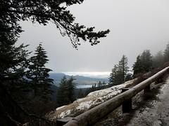 Things I see when I'm running... (Ryan Good) Tags: orcasisland orcasisland100 rainshadowrunning sanjuanislands mtconstitutionroad