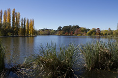 Autumn trees in a park, Canberra (Anna 666) Tags: park blue autumn trees sky sculpture reflection bird fall nature leaves yellow reeds bench pond poplar path australia canberra lakeburleygriffin