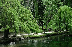 Uno sguardo nel verde (Ska * mon) Tags: trees people italy parco verde green alberi italia gente walk natura persone umbria passeggiata fontidelclitunno salici salicipiangenti