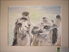 Kameliendamen (wandklex Ingrid Heuser freischaffende Künstlerin) Tags: portrait ingrid animal desert camel tier kamel wüste humps dromedar dache camelidae camelus caran huser supracolor tierportrait wandklex dromedaus wüestenschiff wandkleks