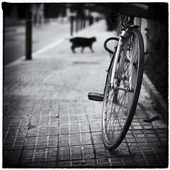 Early Morning Encounters (s a s h i) Tags: street blackandwhite bike cat spain sitges sashi alexarnaoudov