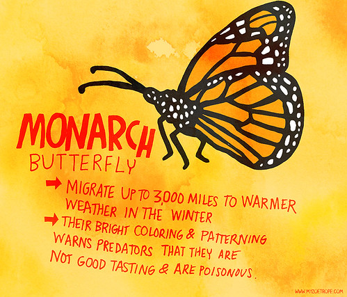 169: Monarch Butterfly