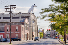 Nipper the RCA Dog (jeffs4653) Tags: usa newyork statue unitedstates landmark icon albany nipper rcadog