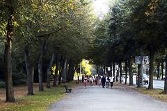 Stockholm (yanfuano) Tags: park parque trees naturaleza nature arboles sweden stockholm estocolmo suecia 2013