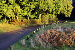 50 @ 50 #40 (2013) - Light On The Lane (cazphoto.co.uk) Tags: trees sunlight heather lane heath posts chelmsford leadin galleywoodcommon