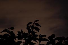 2013 Roger Williams Zoo Jack-o-Lantern Spectacular (cjthibeault) Tags: ri light halloween night dark pumpkin zoo lights glow candle jackolantern trickortreat pumpkins eerie providence rhodeisland treat lantern trick rogerwilliams