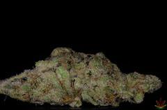 Strawberry (Voodoo Haze) Tags: plant flower weed strawberry nikon grow sigma 420 thc stoned bud em cannabis sativa stoner marihuana ganja indica wiet d7000