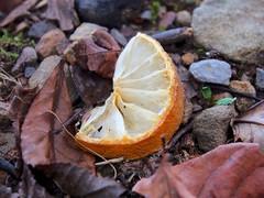 Used fruit (Lynzeangel) Tags: yellow fruit trash lemon garbage used sour fruity lemony odc