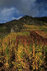 Ahrtal, Ahr Valley, vineyard (Eifeelgood) Tags: autumn fall vineyard favorites indiansummer eifeelgood