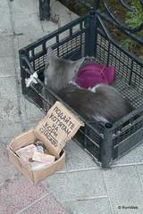 Ласточкино гнездо, бизнес на кошках