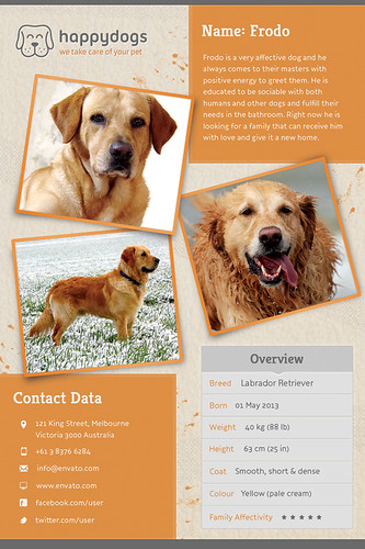 Pet Flyer Gallery Orange Version