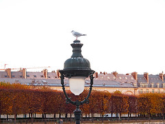 (dbeyly) Tags: trees paris seagull roofs arbres mouette lampadaire toits cheminées