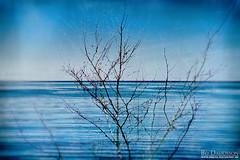 Like a tree by the water (Bozze) Tags: tree texture water composite heaven horizon wwwoppnahorisonterse